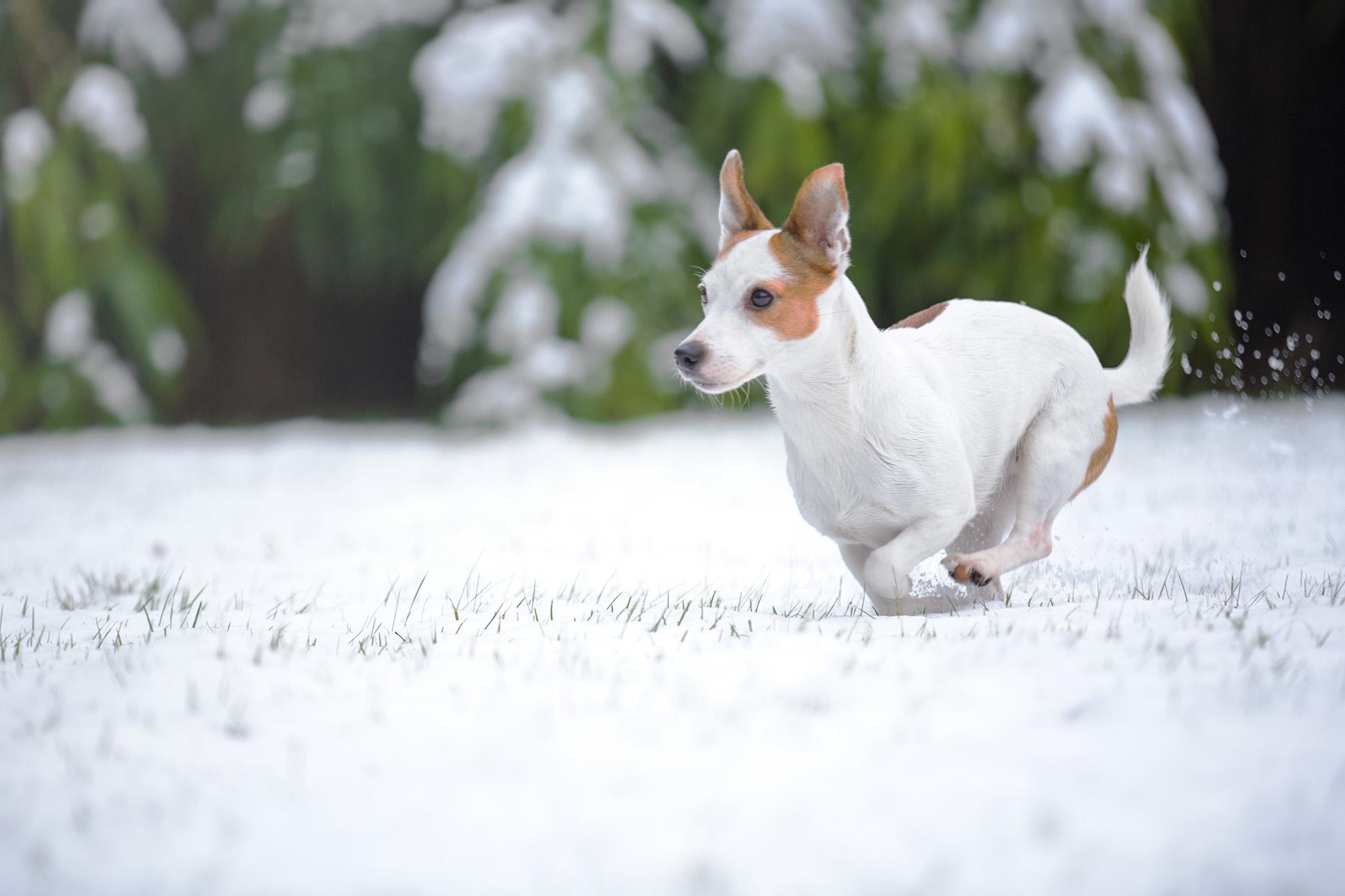 Gefahr für den Hund im Winter: Streusalz