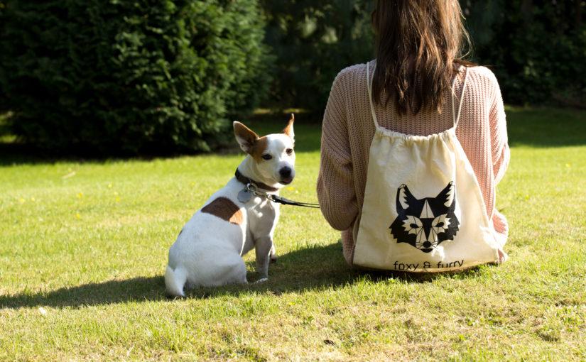 Eine Hundeleine samt Sicherheitsgurt von foxy&furry