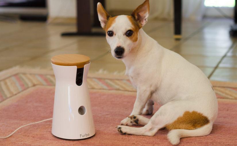 Furbo – die Hunde Kamera zeigt dir alles