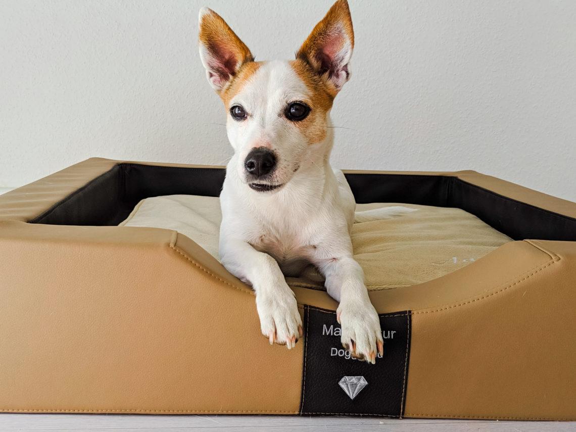 ergonomisches orthopdäisches Hundebett